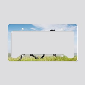 Black friesian horse License Plate Holder