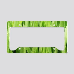 Close Up Grass After A Rainst License Plate Holder