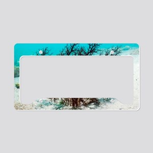 Burrowing sea cucumber License Plate Holder