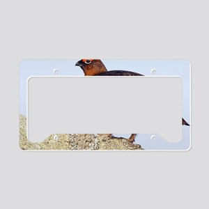 Male red grouse License Plate Holder