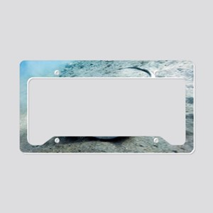 Bluespotted stingray License Plate Holder