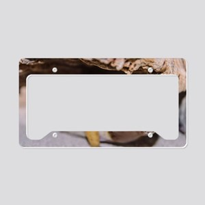 Leopard Gecko License Plate Holder