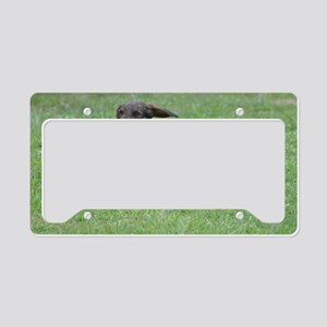 Cute Wire Haired Dachshund License Plate Holder