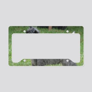 Cute Black Cairn Terrier License Plate Holder