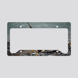 Spirit Of The Wild License Plate Holder