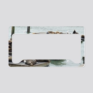 seals at fishermans wharf License Plate Holder