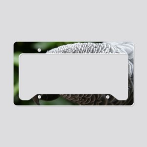 African Grey Parrot License Plate Holder