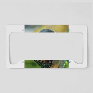 Monkey004 License Plate Holder