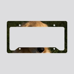 (3) golden retriever head sho License Plate Holder