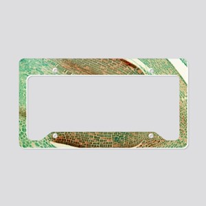 Maize seed, light micrograph License Plate Holder