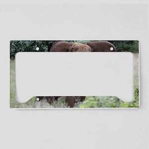 African elephants License Plate Holder