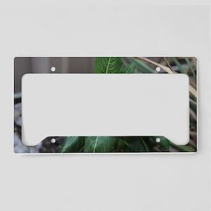 daytime flower  License Plate Holder