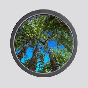 Muir Woods treetops Wall Clock