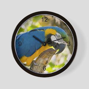 Blue & Gold Macaw Wall Clock