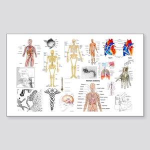 Human Anatomy Charts Sticker
