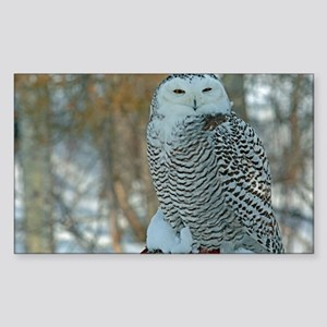 Snowy Owl 01 Sticker