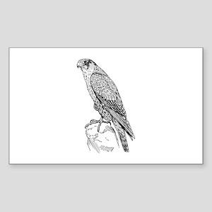 Peregrine falcon Sticker