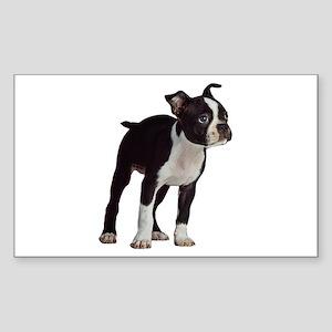 Boston Terrier Sticker (Rectangle)