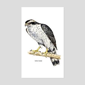 Northern Goshawk Hawk Rectangle Sticker