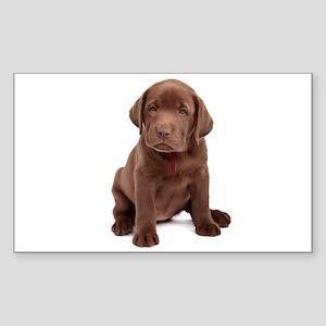 Chocolate Labrador Puppy Sticker (Rectangle)