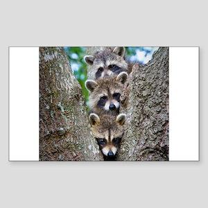 Baby Raccoon Trio Rectangle Sticker