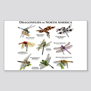 Dragonflies of North America Sticker (Rectangle)