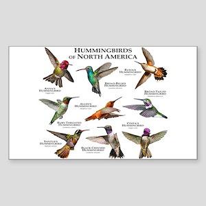 Hummingbirds of North America Sticker (Rectangle)