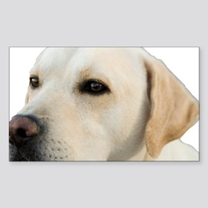 Yellow Lab Head Sticker (Rectangle)