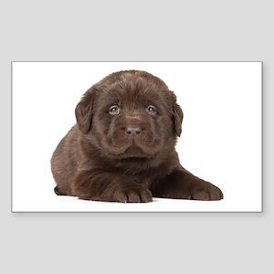Chocolate Lab Puppy Sticker (Rectangle)