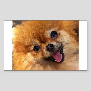 Happy Pomeranian Sticker (Rectangle)
