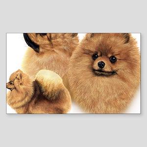 Pomeranian Multi Sticker (Rectangle)