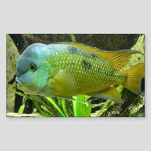 Wonderful Fish Sticker (Rectangle)