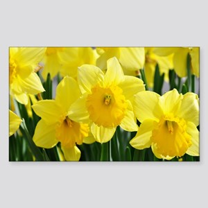 Trumpet Daffodil Sticker (Rectangle)