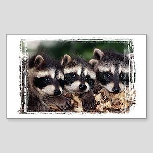 3 Raccoons Sticker (Rectangle)