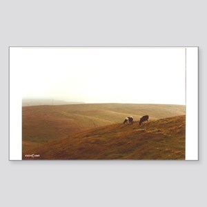 Point Reyes dairy pasture Sticker (Rectangle)
