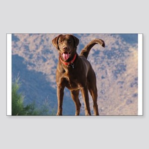 Lovable Chocolate Lab Sticker (Rectangle)
