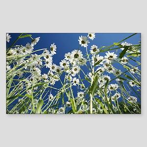 Ox-eye daisies - Sticker (Rectangle)