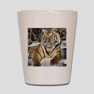 siberian tiger art Shot Glass