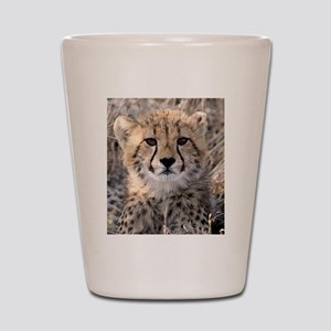 Cheetah Cub Shot Glass