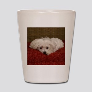 MalteseShower2 Shot Glass