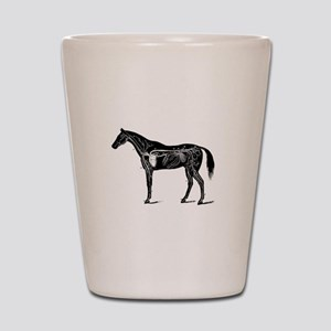 Horse's circulatory system, Anatomy of Shot Glass