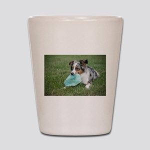 miniature australian shepherd with toy Shot Glass