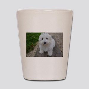 coton de tulear on bench Shot Glass