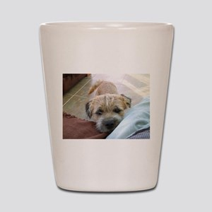 border terrier begging Shot Glass