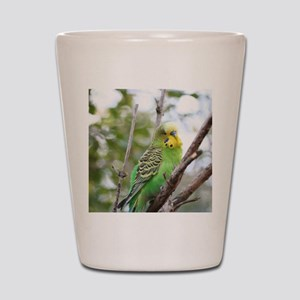 Budgie Shot Glass