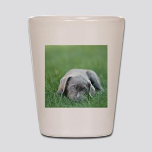 Blue eyed puppy resting on grass. Shot Glass