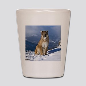Puma During Winter Shot Glass