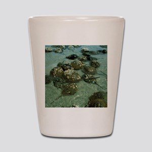 Horseshoe crab research Shot Glass