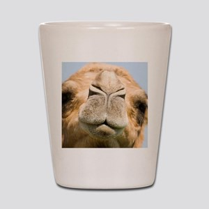 3b1cca4148fd Camel Face Shot Glasses - CafePress