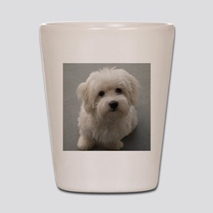 coton de tulear puppy Shot Glass